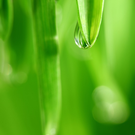 big water drop on grass blade Stock Photo - 8917460