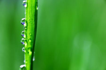 agua grande colocar en el módulo de hierba