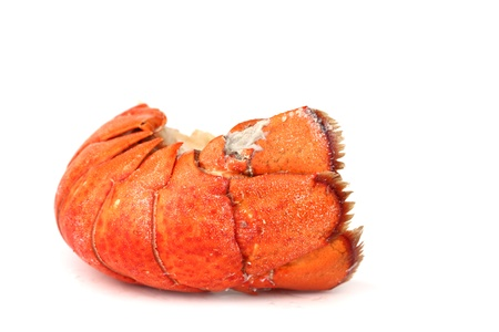 lobster tail: red lobster tail close up