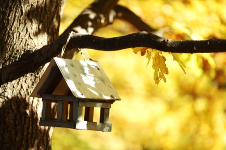 nido de pajaros:  cerrar Birdhouse en el bosque de oto�o