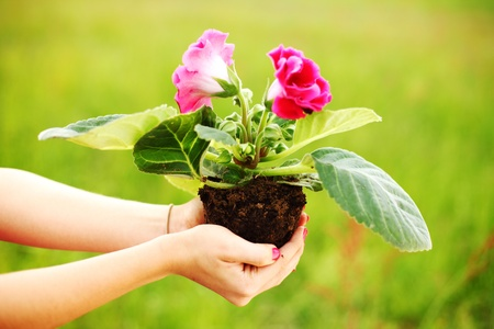 hand holding a flower on soil  photo