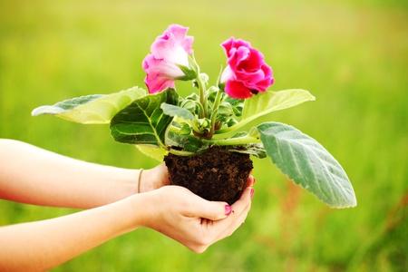 vegetable gardening: hand holding a flower on soil