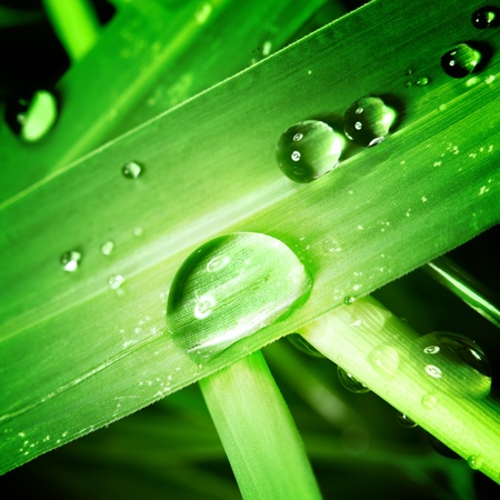 climate morning: drop on grass macro close  Stock Photo