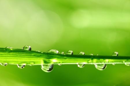 Big acqua goccia sulla lama di erba
