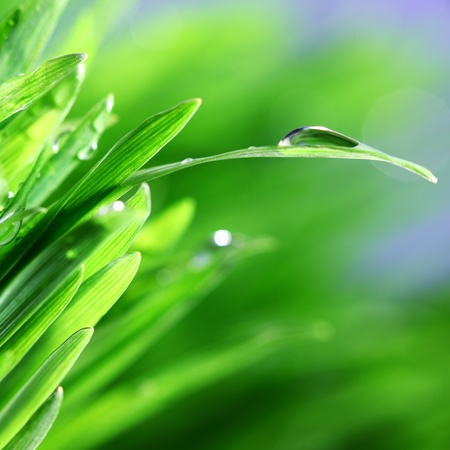 water drops on grass blade nature background Stock Photo - 9067689