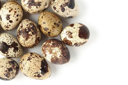 quail egg: quail egg background macro close up Stock Photo
