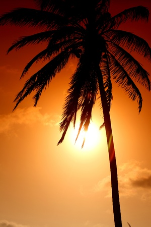 palm in yellow sunrise sky photo
