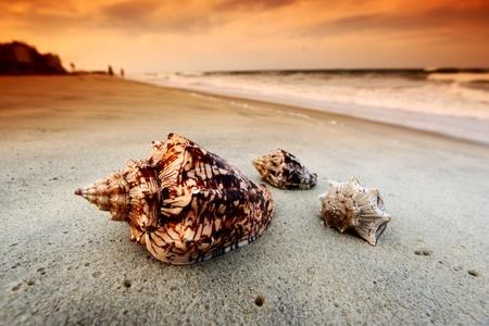 shell on sand under sunset sky photo