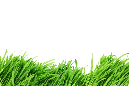 leaf close up: grass isolated on white background