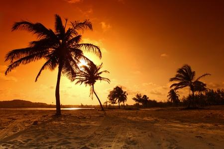 palm in yellow sunrise sky Stock Photo - 9313165