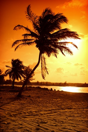strand australie: Palm in gele zons opgang sky