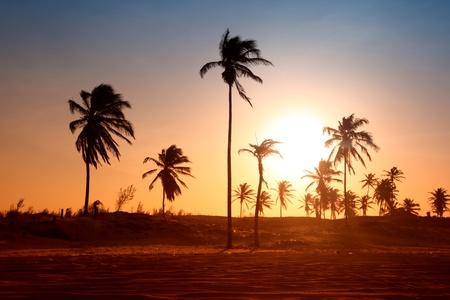 strand australie: Palm in gele zons opgang hemel  Stockfoto