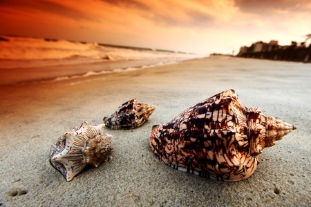 shell on sand under sunset sky Stock Photo - 9343893