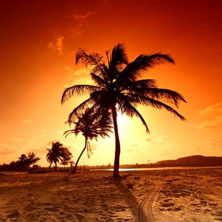 palm in yellow sunrise sky Stock Photo - 9411683