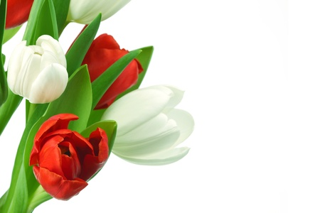 colorful tulips close up holiday background Stock Photo - 9408019