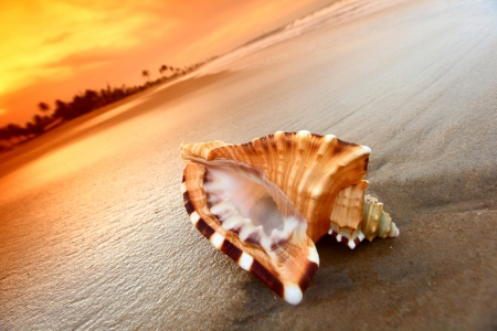 shell on sand under sunset sky Stock Photo - 9411927