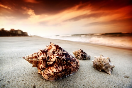 perfect waves: shell on sand under sunset sky Stock Photo