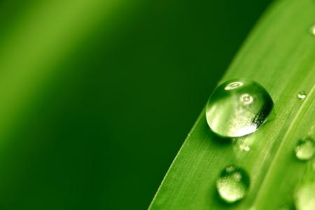 leaf water drop: big water drop on grass blade Stock Photo