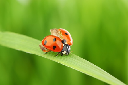 ladybug on grass green on background Stock Photo - 9706618