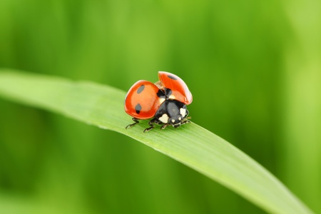 ladybug on grass green on background Stock Photo - 9855234