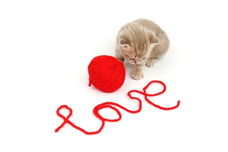 cat and wool sign love photo