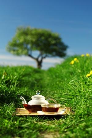 Natural tea in the pot Stock Photo - 9909701
