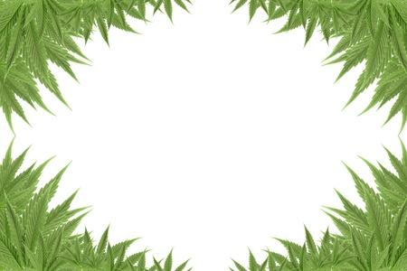 marijuana cannabis background green textures photo