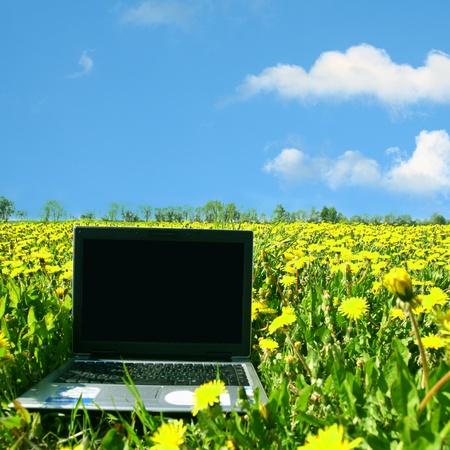 creative business laptop nature work photo