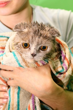 wash cat under water wet  photo