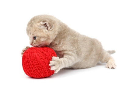 cat and red wool ball isolated on white Stock Photo - 9993289