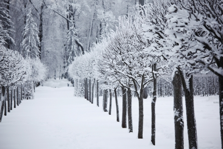 winter trees on snow white background Stock Photo - 9993309