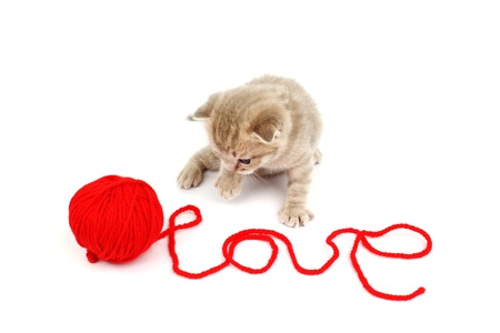 cat and wool sign love Stock Photo - 10015062