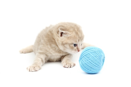 ball of wool: cat and blue wool ball isolated on white