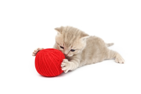 cat playing: cat and red wool ball isolated on white