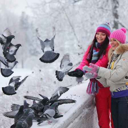 pigeons: winter women give food to the pigeon Stock Photo