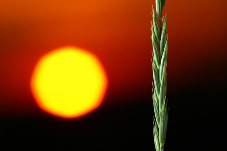 sunrise and green plant close up photo