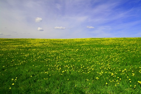 on pasture: dandelion landscape under blue sky Stock Photo