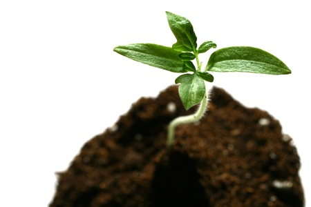 plant new life growth concept Stock Photo - 10136073