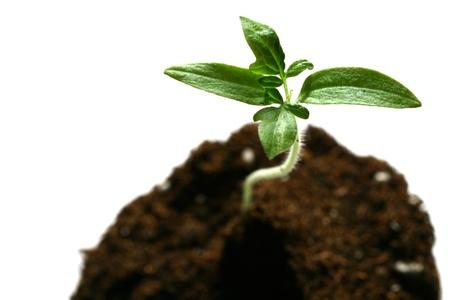 germinados: planta nueva vida concepto de crecimiento