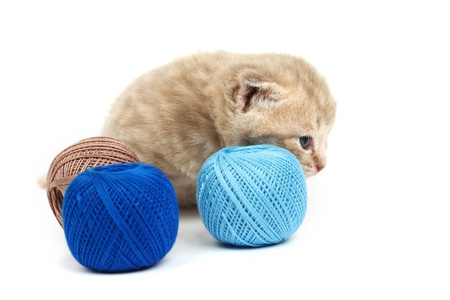 cat and blue wool ball isolated on white photo