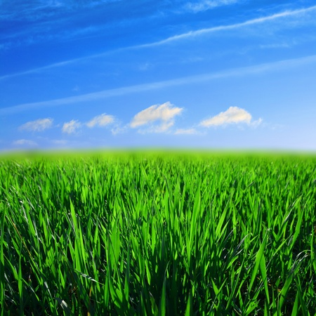 lea: green grass field nature background Stock Photo