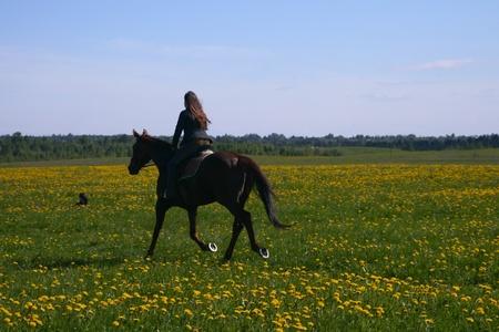 horse rider in green dandelion field photo