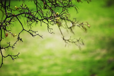 branches on a background of grass Stock Photo - 10164368