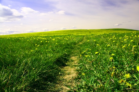 agriculture wallpaper: dandelion landscape under blue sky Stock Photo