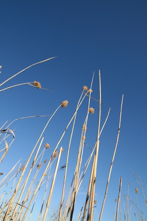 posterity: plants in blue sky nature