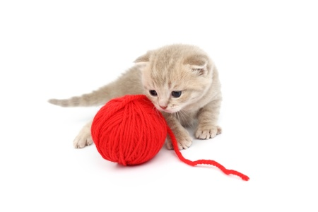 cat and red wool ball isolated on white Stock Photo - 10345247
