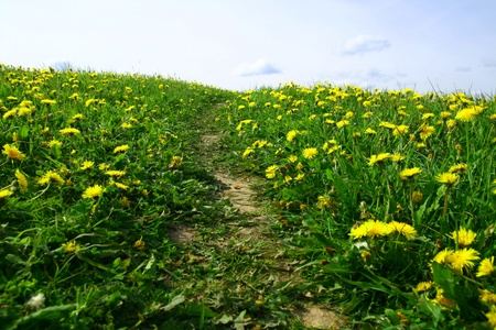 dandelion landscape under blue sky Stock Photo - 10362064