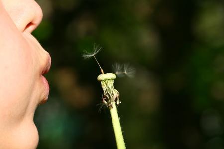 girl face blow on white dandelion photo
