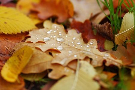 water drop on orange autumn leaf Stock Photo - 10435850