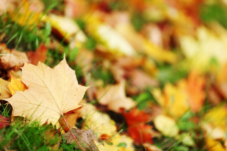 autumn leaves in the park photo
